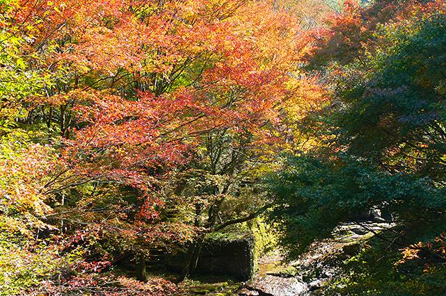 グリーンピア八女周辺の紅葉