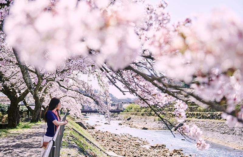 ホテルインディゴ箱根強羅 - 春の風景