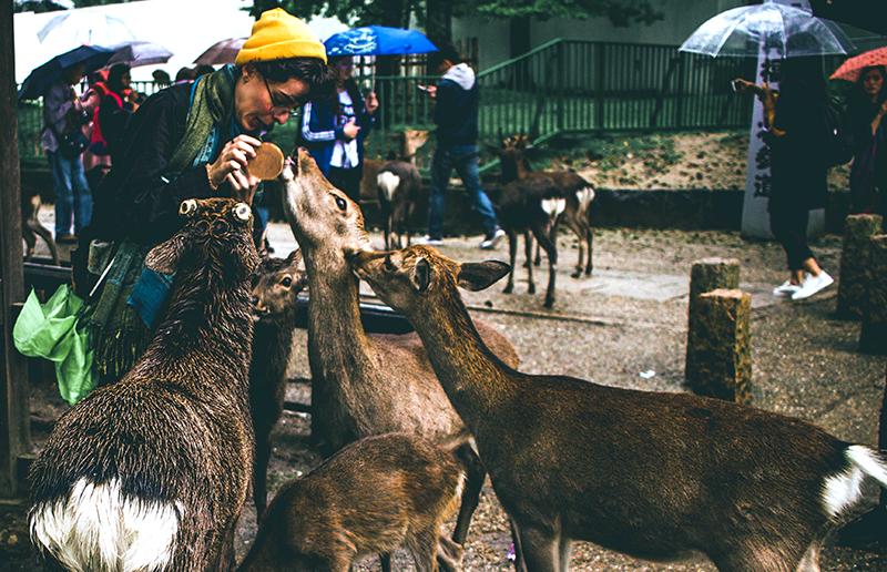 訪日外国人の人気旅先:奈良県