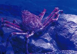 九州の深海