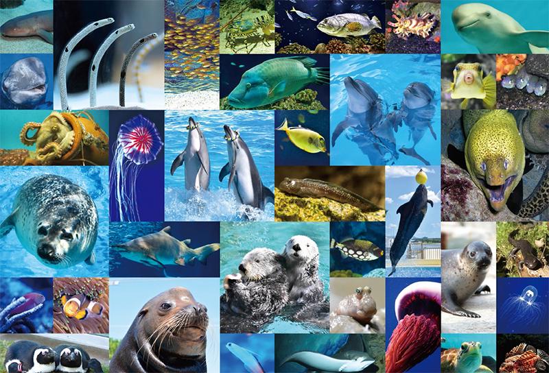 マリンワールド海の中道の生き物たち