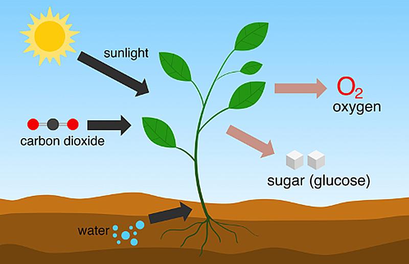 二酸化炭素を農業分野で肥料として活用