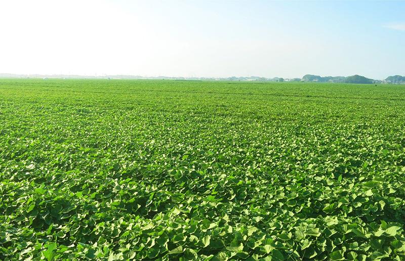 有機農業面積を増やす