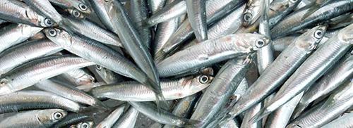 魚のアラなどから出る「フィッシュソリュブル」